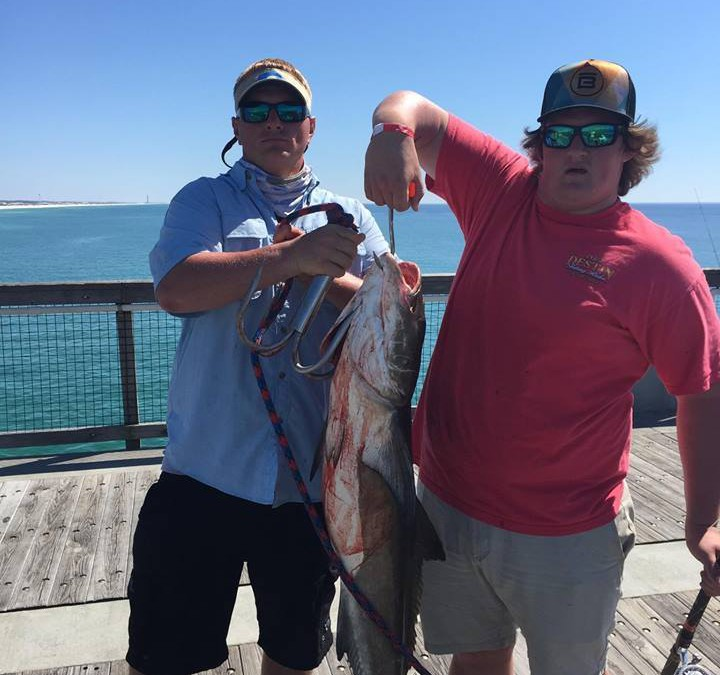 Destin fishing charters author at destin fishing charters for Destin florida fishing charters